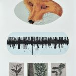 Vulpes vulpes, sérigraphie, chine-collé, 76 x 56 cm