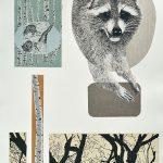 Raton-laveur, sérigraphie, chine-collé, 56 x 37,5 cm